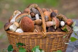 Więcej grzybów